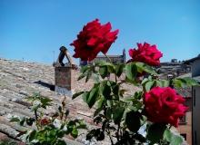 orvieto_in_terrazza_vista-duomo_rosa
