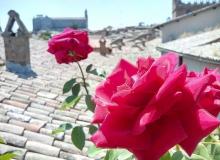 orvieto_in_terrazza_vista-duomo_rosa_1