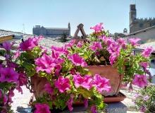 orvieto_in_terrazza_vista-duomo_torre_del_moro